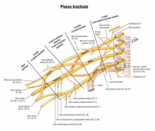 Cervicobrachialgia_02